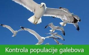 Kontrola populacije galebova
